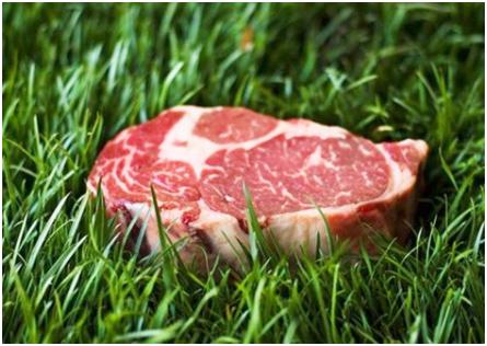 grass-fed-beef1.jpg