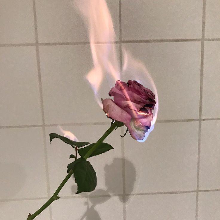 5db3b6a836a80bc89c5a0d4b2eee1a77--rose-flowers-cover-photos.jpg