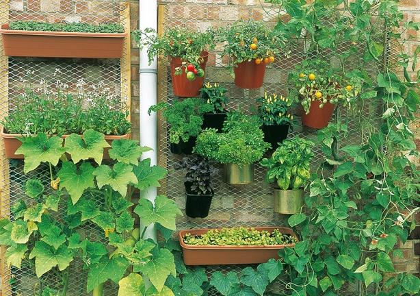 urban-garden.jpg