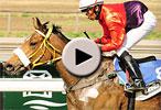 igugu racehorse rss