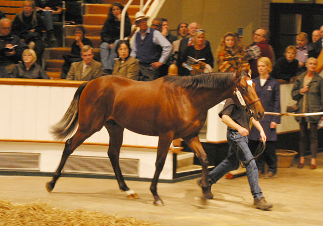 Mullins Bay as a yearling