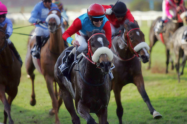 Dylan's Promise - Betting World Oaks (Grade 2) / Gold Circle (p)