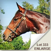 national yearling sale lot 333 maak 'n plan