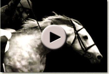 video of a horse in motion