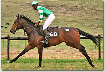 click here to view photos of the summerhill ready to run draft taken at the summerhill gallops