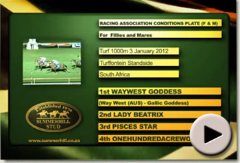 Waywest Goddess wins Racing Association Conditions Plate