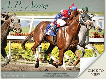 a.p. arrow racehorse