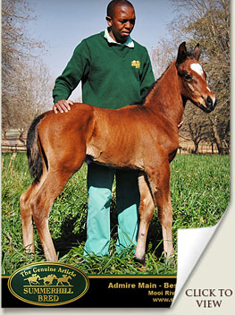 first admire main foal