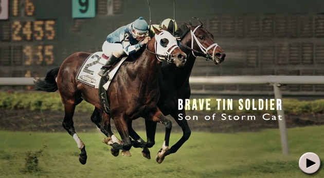 Brave Tin Soldier - National Yearling Sale