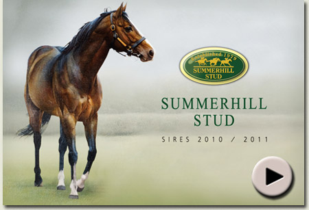 video of stallions at summerhill stud, kwazulu-natal, south africa