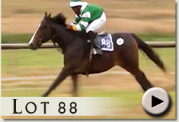 lot 88 silverano by silvano video