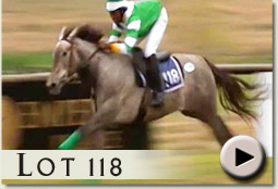 lot 118 downhill girl by cataloochee video