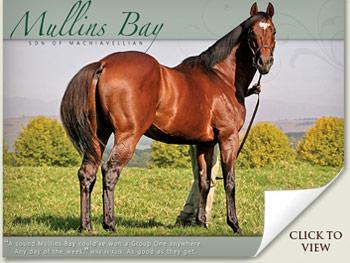 Mullins Bay Stallion
