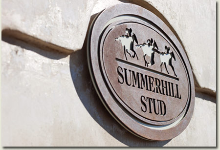 Summerhill Stud Bronze