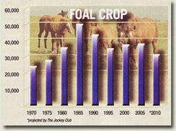 usa foal crop statistics