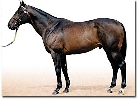 street cry stallion
