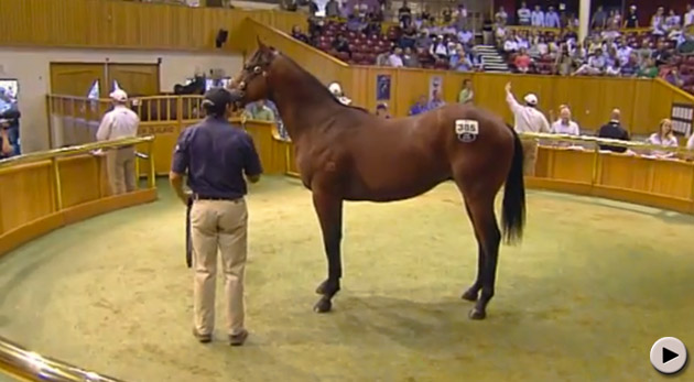 New Zealand Bloodstock Premier Yearling Sale