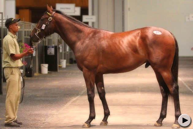 Cape Premier Yearling Sale Lot 27 - Silvano - Racing Heart