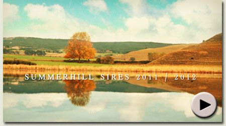 Summerhill Stallion Film 2011 / 2012