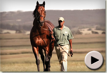 Stronghold Cape Premier Yearling Sale 2011