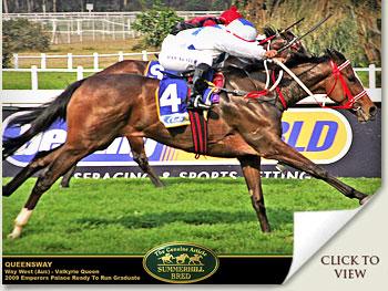 queensway racehorse