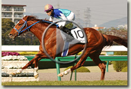 admire main hanshin racecourse video