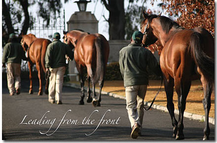 summerhill south africa sires