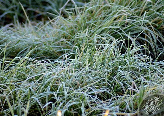 kzn-frost-6.jpg