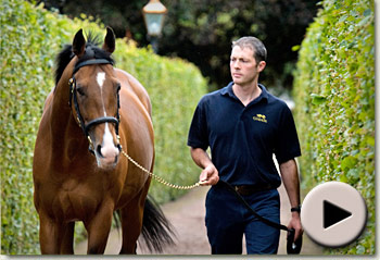 Coolmore Stud Documentary 2011