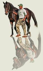 solskjaer stallion