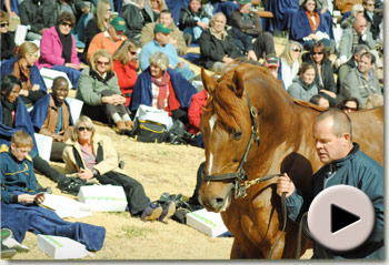 Investec Stallion Day 2011 Video