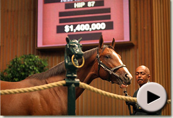 Keeneland September Yearling Sale Hip 87 A.P Indy - Malka