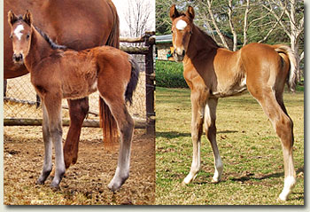 stronghold and mullins bay foal photos
