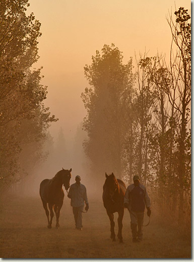 a misty morning at summerhill stud