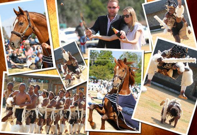 Investec Summerhill Stallion Day