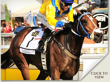 Igugu, favourite for the Vodacom Durban July