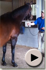 Ipi Tombe in foal to Medaglia d'Oro