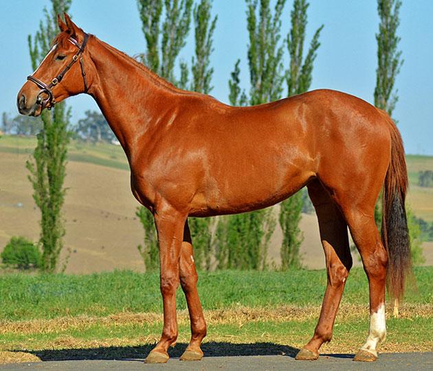 Lot 71: Trust The Pink (Mullins Bay x Vanish)