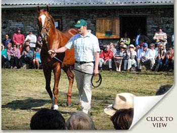 robert cowan leads admire main at the summerhill stallion day