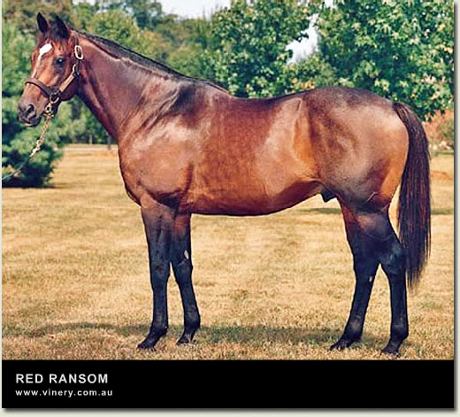 red ransom stallion