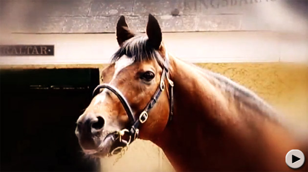 Galileo Stallion
