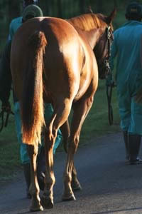 Summerhill Yearling