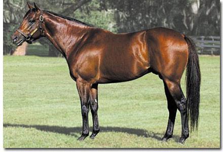 trippi stallion