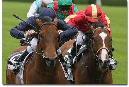 duke of marmalade racehorse