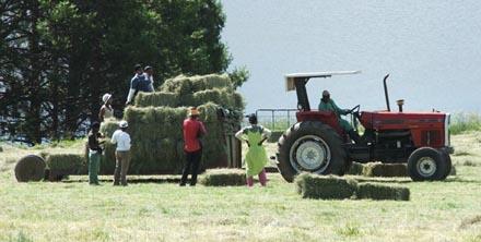 Tractor%20Hay%202%20LR.jpg