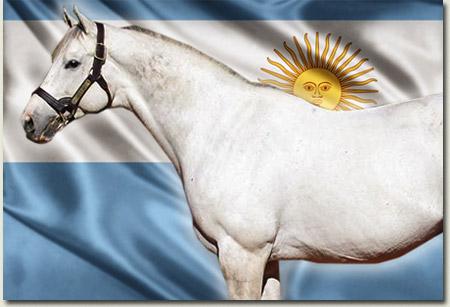 Tapit Stallion