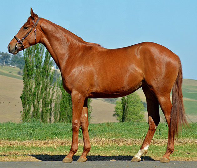 Lot 131: Raise and Double (Kahal x Deal A Double)