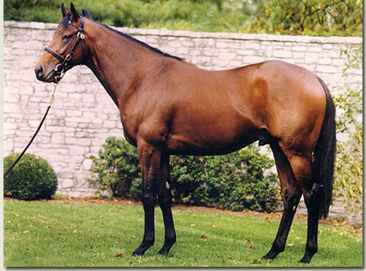 johannesburg stallion