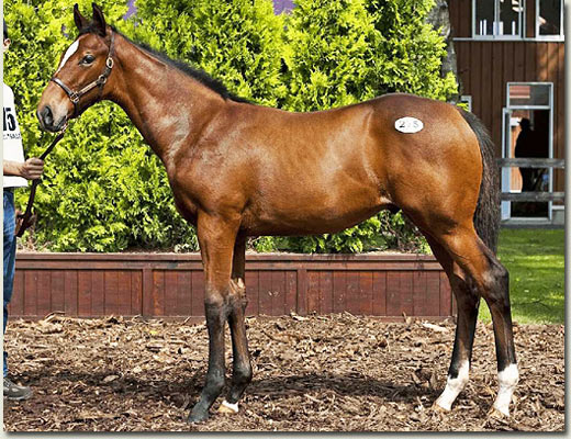 lot 275 foal colt by daiwa major