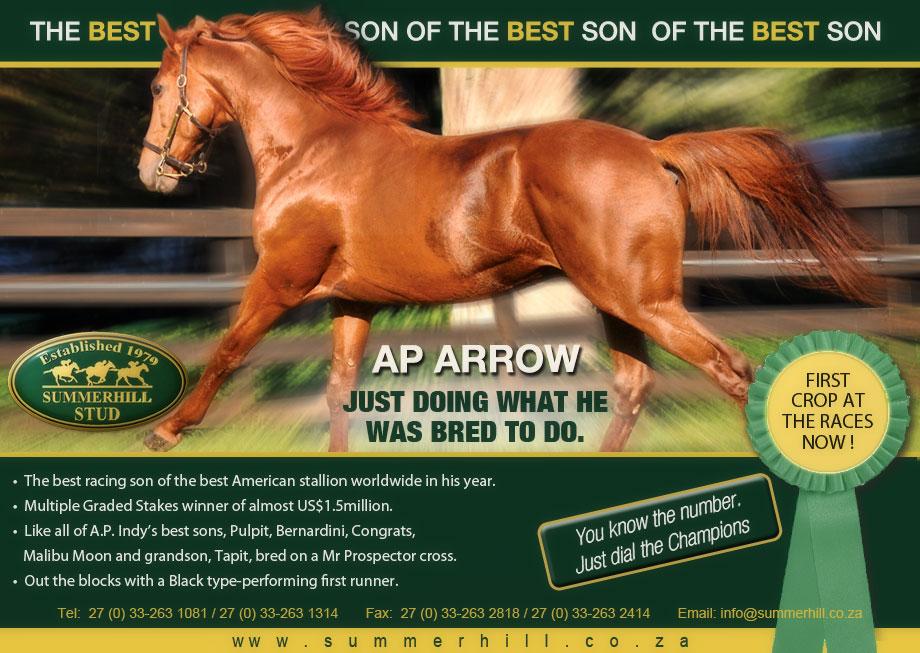AP Arrow - National Yearling Sale
